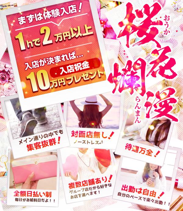 桜花爛漫の写真
